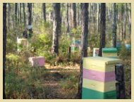 Daydream Apiary Beehives