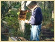 Kittrell inspects a frame of Honeybees